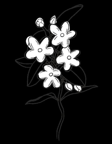 Jasmine / FLORAL