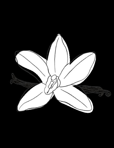 Vanilla / SPICY