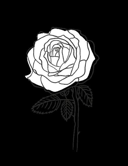 Rose / FLORAL