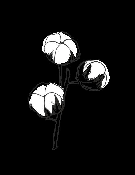 Cotton Flower / FLORAL