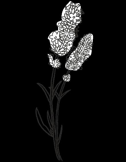 Lavender / FLORAL