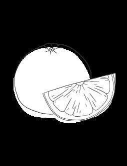 11. Grapefruit / FRESH