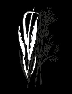 12. Wild Herbs / FRESH