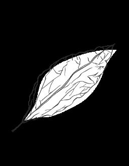 15. Tobacco Leaf / WOODY