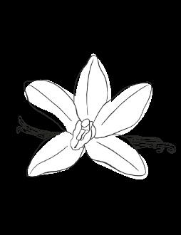 19. Vanilla / SPICY