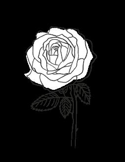2. Rose / FLORAL