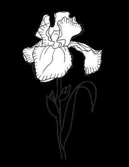 3. Iris / FLORAL