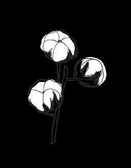 4. Cotton Flower / FLORAL
