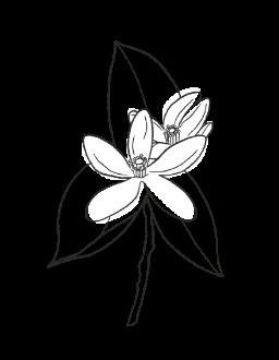 5. Orange Blossom / FLORAL