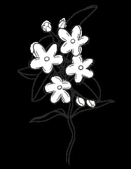 7. Jasmine / FLORAL