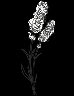 8. Lavender / FLORAL